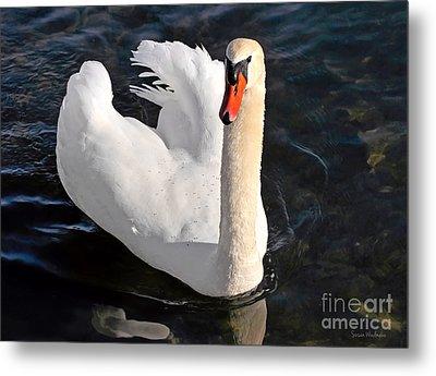 Swan With A Golden Neck Metal Print by Susan Wiedmann
