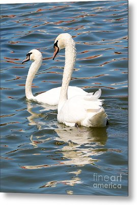 Swans And Swirls Metal Print by Carol Groenen