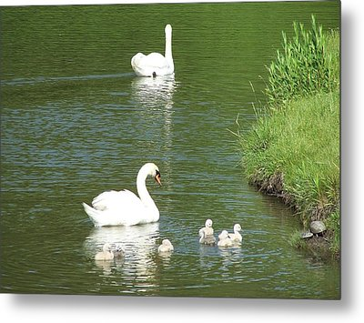 Metal Print featuring the photograph Swans And Turtles by Teresa Schomig
