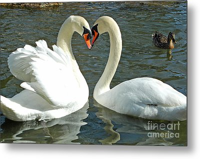 Swans At City Park Metal Print