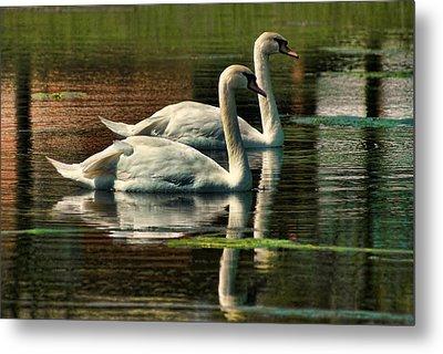 Swans Cruising Metal Print