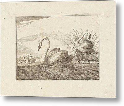 Swans, Francis Barlow, Pieter Schenk Metal Print by Francis Barlow And Pieter Schenk (i)
