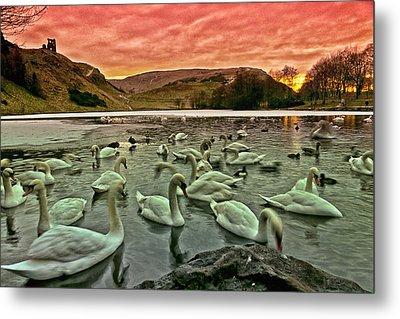 Swans In The Loch Metal Print by Jean-Noel Nicolas