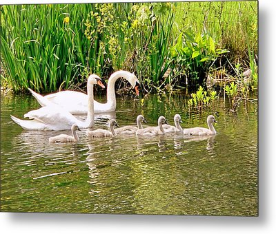Metal Print featuring the photograph Swans by Janice Drew