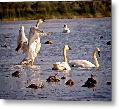 Swans Metal Print by Karma Ganzler