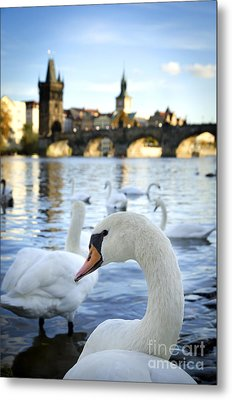 Swans On Vltava River Metal Print by Jelena Jovanovic
