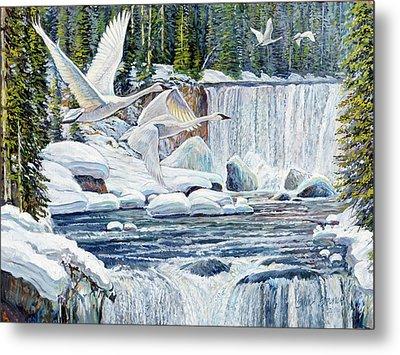 Swans Over Collonade Falls Metal Print by Steve Spencer