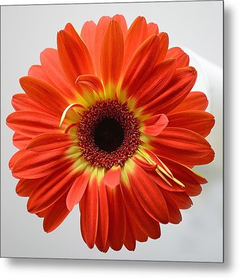 Metal Print featuring the photograph Sweet And Simple by Melanie Moraga
