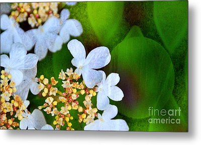 Metal Print featuring the photograph Sweet And Sour by Darla Wood