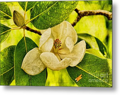 Sweet Bay Magnolia After The Rain Metal Print by Lois Bryan