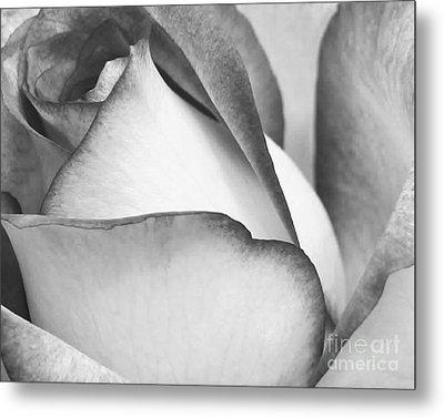 Sweet Black And White Rose  Metal Print by Sabrina L Ryan