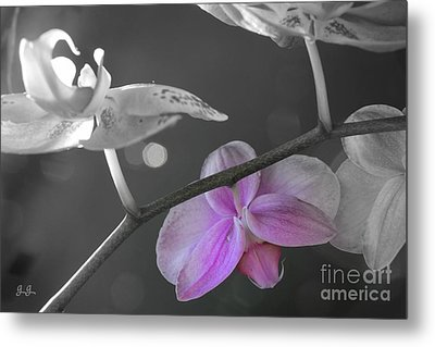 Sweet Dreams Metal Print by Geri Glavis