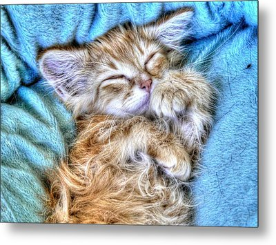 Sweet Dreams Tilly Metal Print by Linda Rich