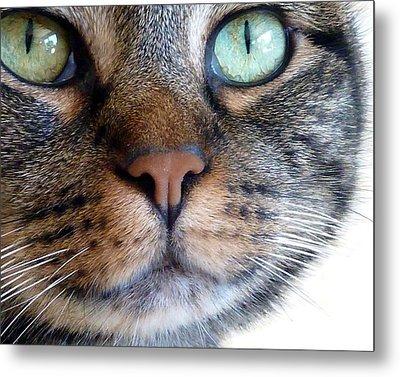 Sweet Green Eyes Metal Print by Patricia Strand