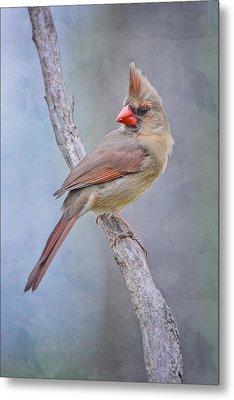 Sweet Little Lady Redbird Metal Print by Bonnie Barry