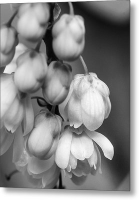 Metal Print featuring the photograph Sweet Mahonia Bloom by Patricia Schaefer