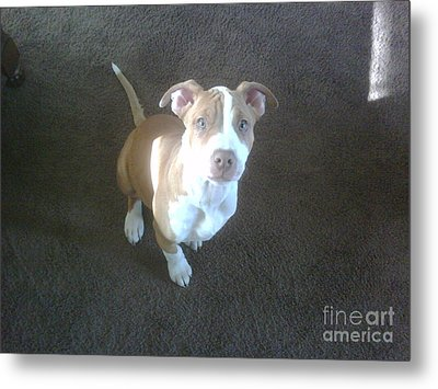 Sweet Nala Metal Print by Jeff Pickett
