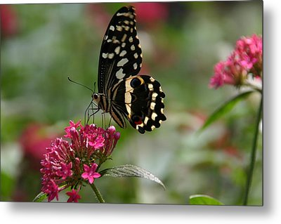 Metal Print featuring the photograph Sweet Nectar by Denyse Duhaime