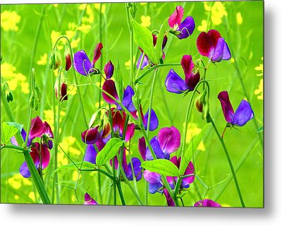 Metal Print featuring the photograph Sweet Peas by Byron Varvarigos
