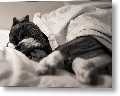 Sweet Sleeping Boxer Metal Print by Stephanie McDowell