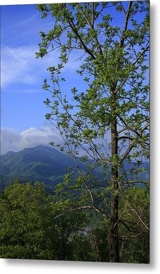 Sweet Springtime On The Blue Ridge Parkway Nc Metal Print by Mountains to the Sea Photo