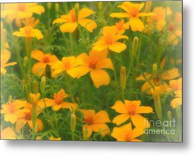 Sweet Summer Marigolds Metal Print