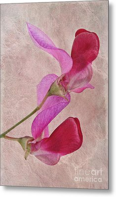 Sweet Textures 2 Metal Print by John Edwards