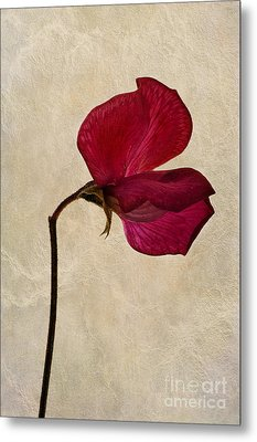 Sweet Textures Metal Print by John Edwards