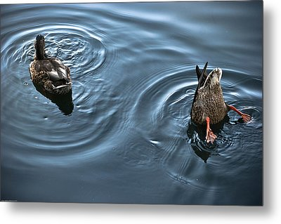 Swim And Take The Plunge Metal Print by Allan Millora