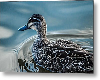 Metal Print featuring the photograph Swimming Around  by Naomi Burgess