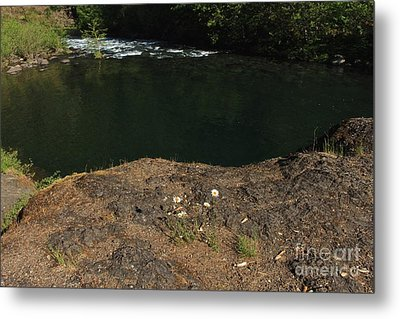 Swimming Hole  Metal Print by Tim Rice