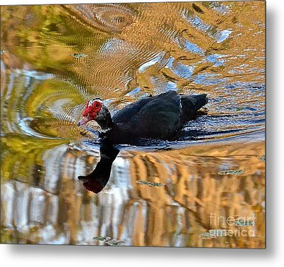 Swimming In Color Metal Print