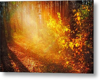 Swimming In Golden Light Metal Print by Jenny Rainbow