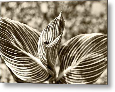 Swirls And Stripes Metal Print