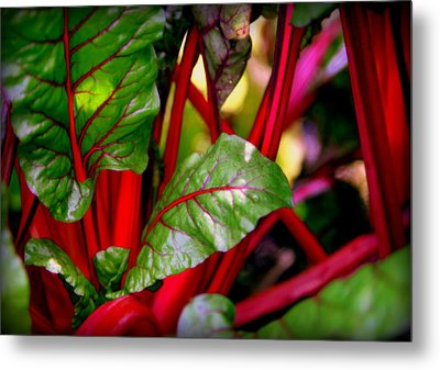 Swiss Chard Forest Metal Print by Karen Wiles