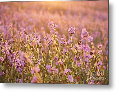 Symphony In Pink Metal Print by Anne Gilbert