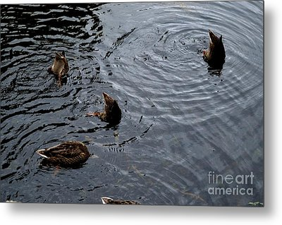 Synchronised Swimming Team Metal Print