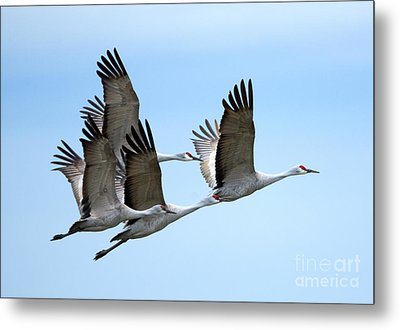 Synchronized Metal Print by Mike Dawson