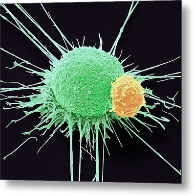T Lymphocyte And Cancer Cell Metal Print