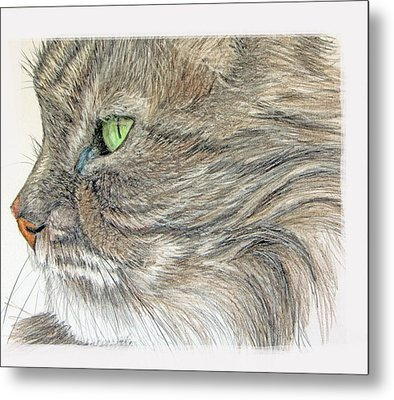 Tabby Cat Metal Print by Mary Mayes