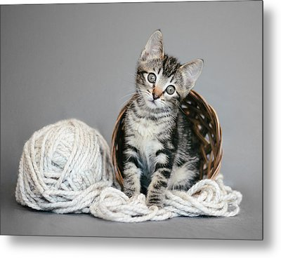 Tabby Kitten And Yarn - Animal Rescue Portraits Metal Print
