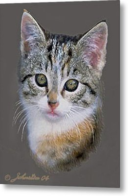 Tabby  Kitten An Original Painting For Sale Metal Print by Bob and Nadine Johnston