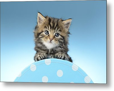 Tabby On Polka Dot Metal Print