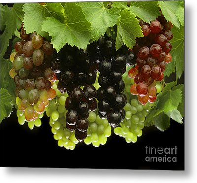 Table Grapes Metal Print by Craig Lovell