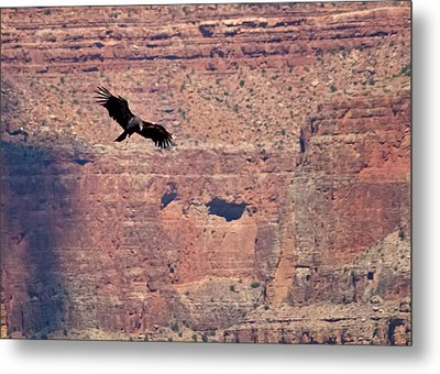 Tagged Condor In The Canyon Metal Print by R J Ruppenthal