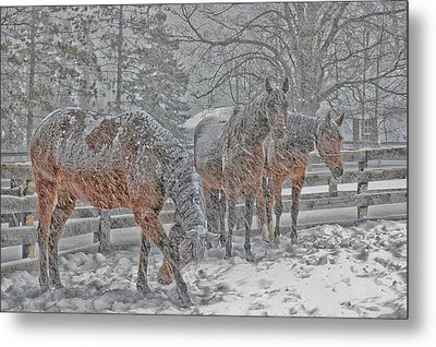 Metal Print featuring the photograph Tails To The Wind by Gary Hall