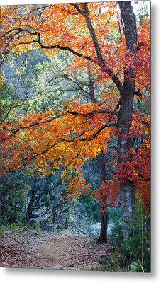 Take A Bough Metal Print
