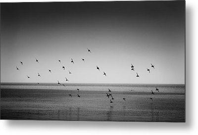 Take Flight 2 Metal Print