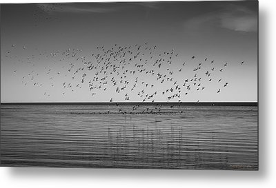 Take Flight 3 Metal Print
