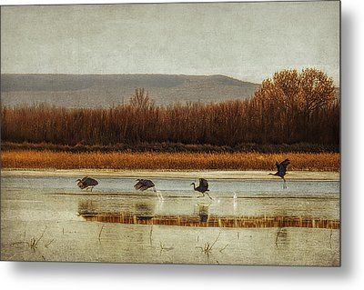 Takeoff Of The Cranes Metal Print by Priscilla Burgers